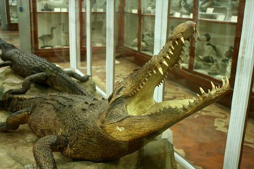 Museo de Historia Natural Florencia