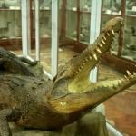 Museo de Historia Natural (La Specola)